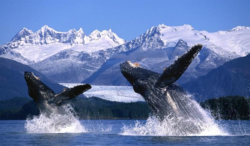 alaska-whales_618814